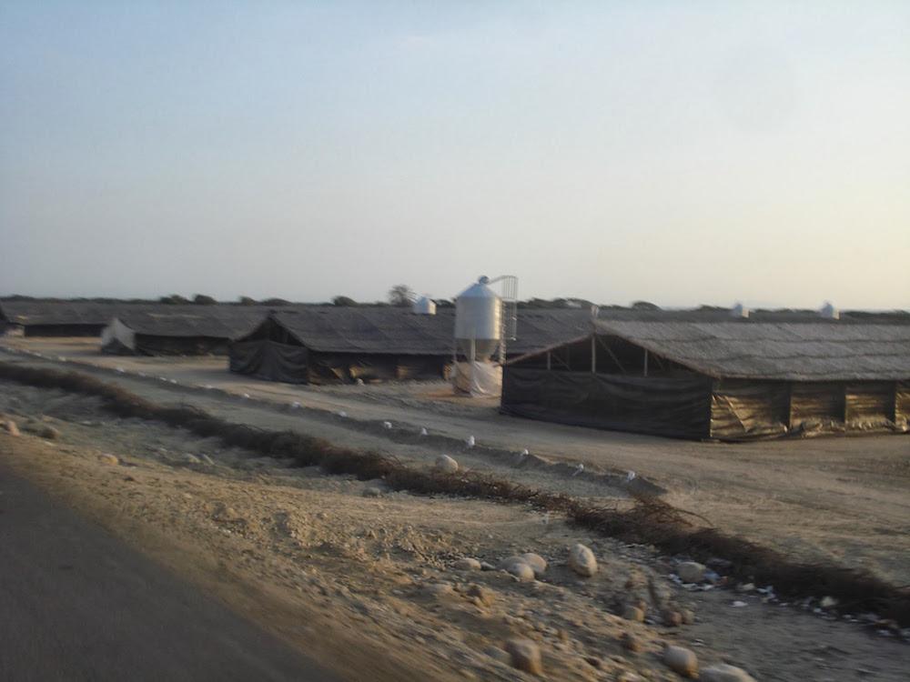élevage de poulets sur la Panamericana au pérou