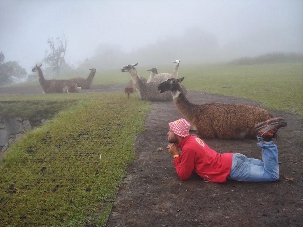 amis lamas au machu picchu Pérou