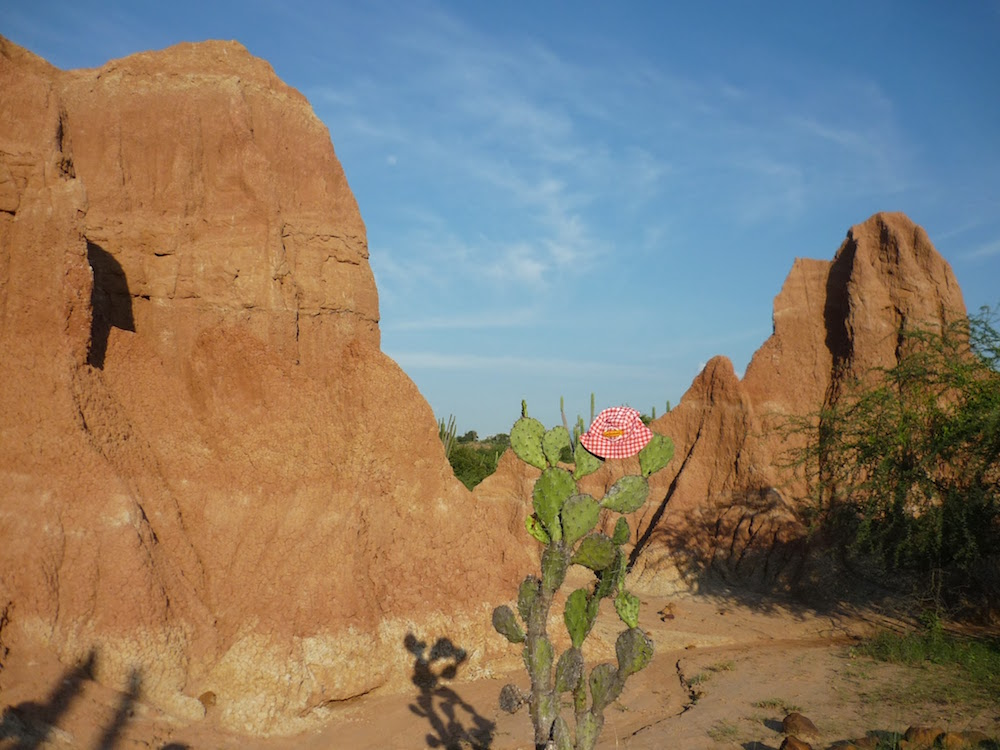 cactus rond et maigre desert de tatacoa colombie