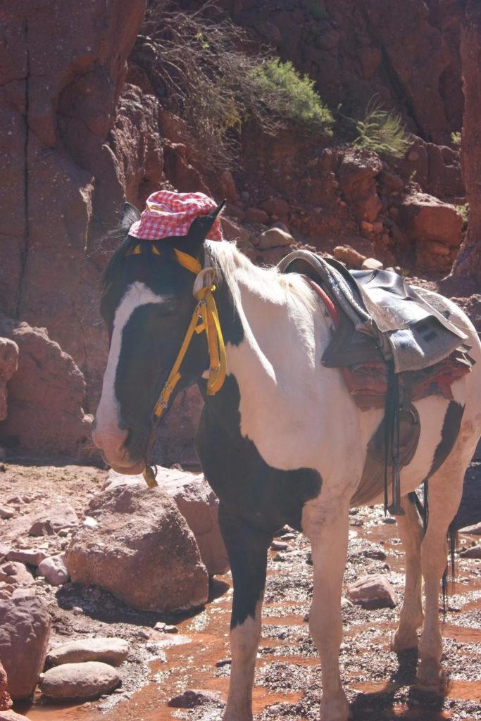 balade a cheval blanc en bolivie