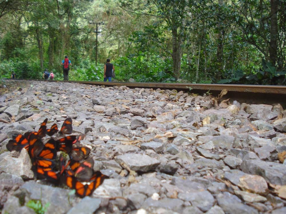 papillons machu piccu Pérou