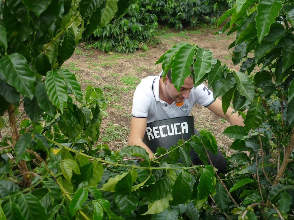ramasseur de café en Colombie Recuca