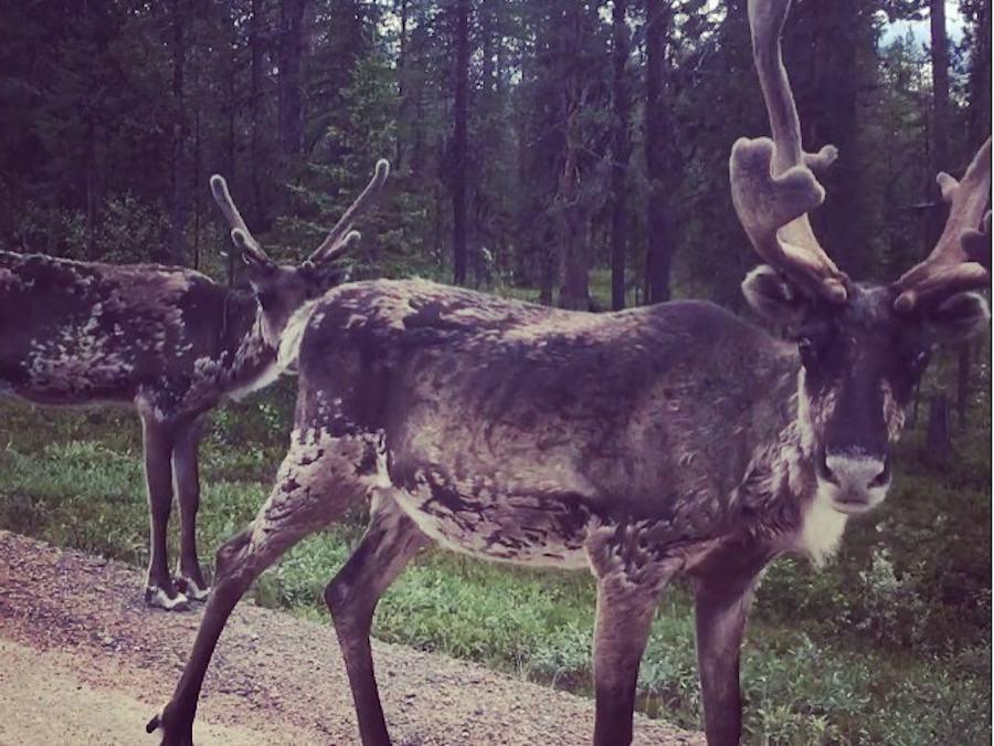 Superbe arrivée en Laponie et incursion chez les Sami sur la route du Nordkapp