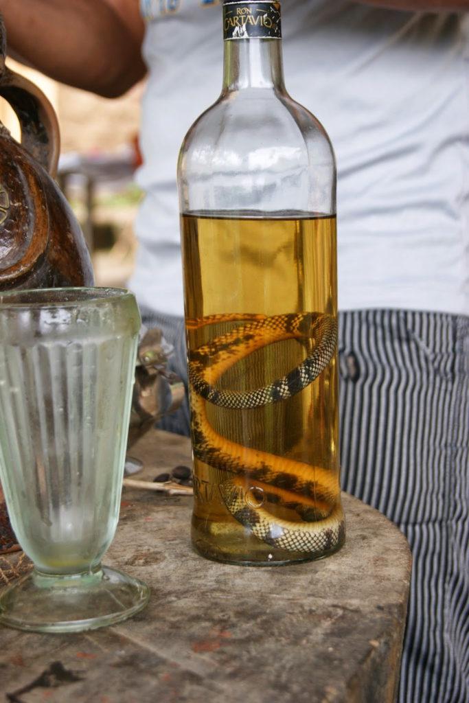 alcool canne à sucre et vipère Pérou