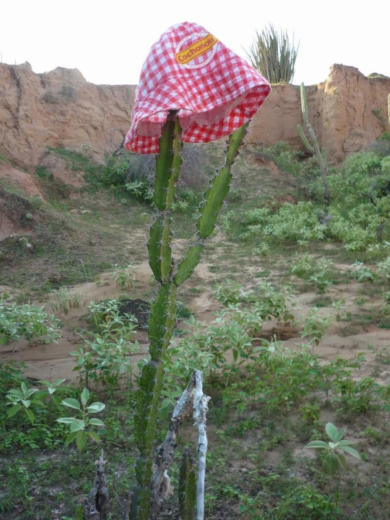 cactus maigre desert de tatacoa Colombie