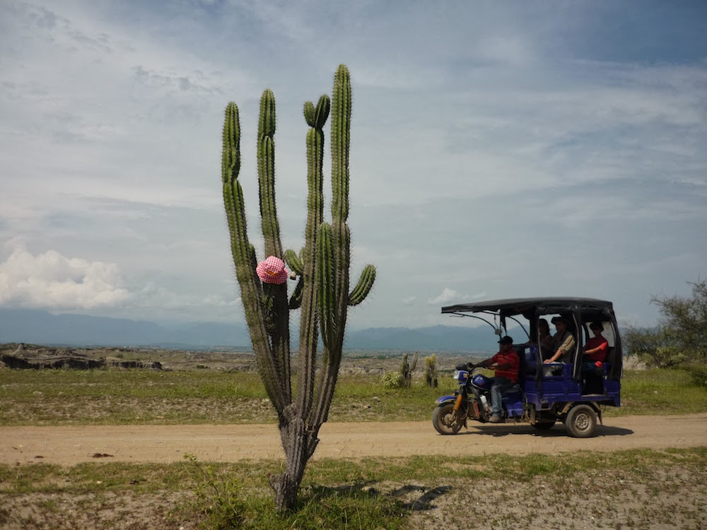 grand cactus désert de Tatacoa Colombie