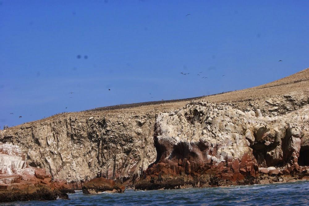 Colonie d'oiseaux sur les iles Ballestas Pérou