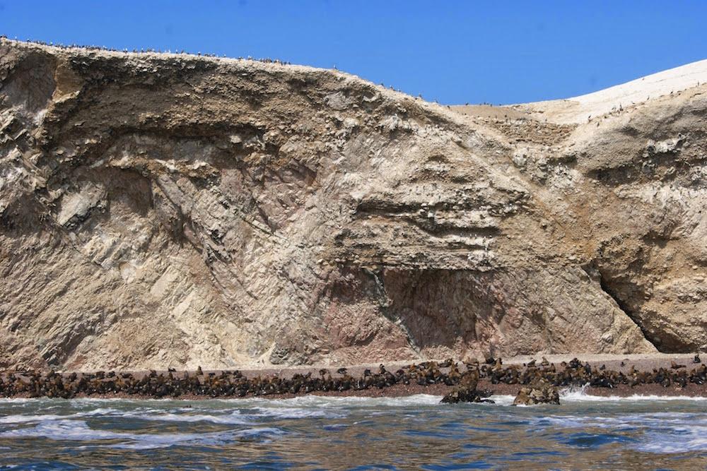 Colonie de loups de mer sur les iles Ballestas Pérou