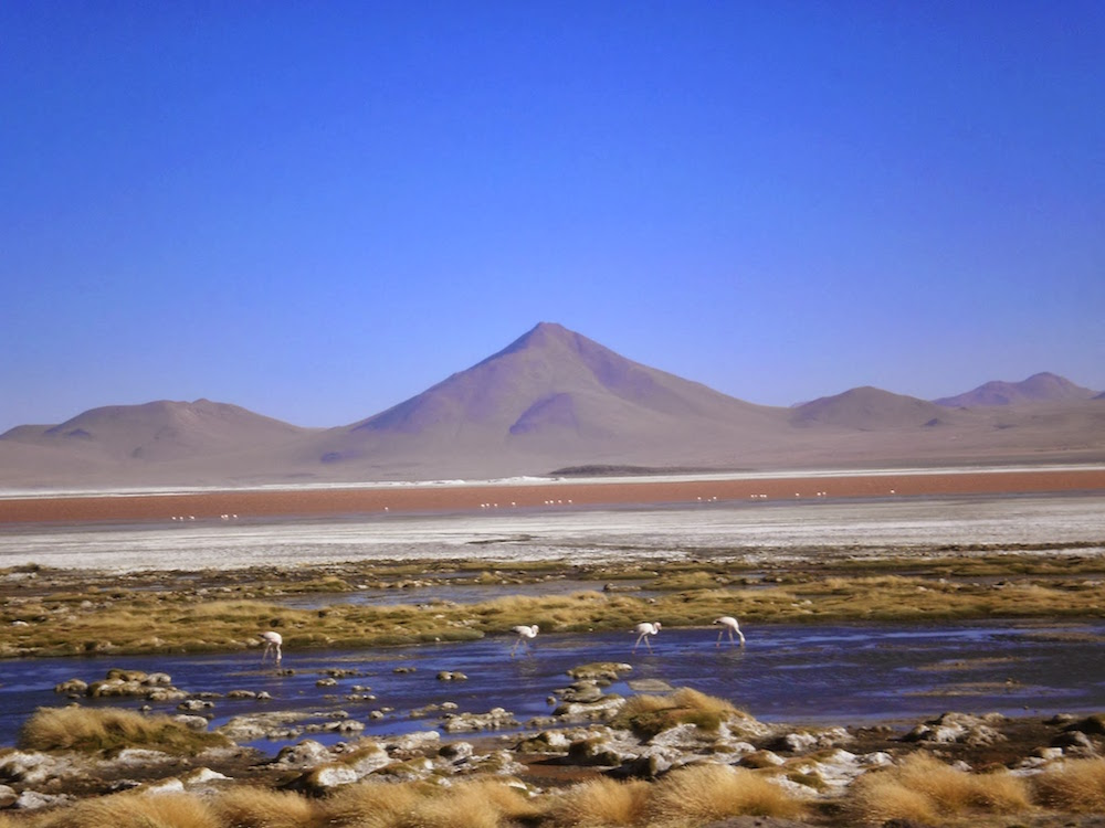 laguna colorada solivie sud lipez - lacs colorés