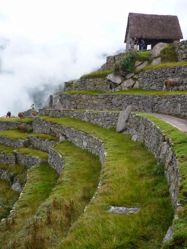 terrasses cultures au machu picchu Pérou